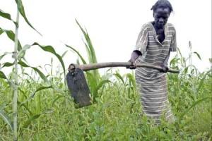 Les pertes post récolte coutent 2,3 milliards de dollars à l'Afrique chaque année. DR