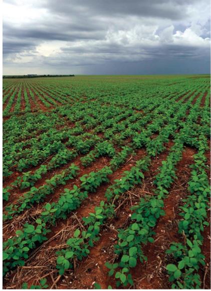 Culture de soja au brésil : les surfaces de culture de soja au Brésil sont équivalentes à la superficie du Royaume-Uni. Crédit photo : Peter Caton / WWF-UK