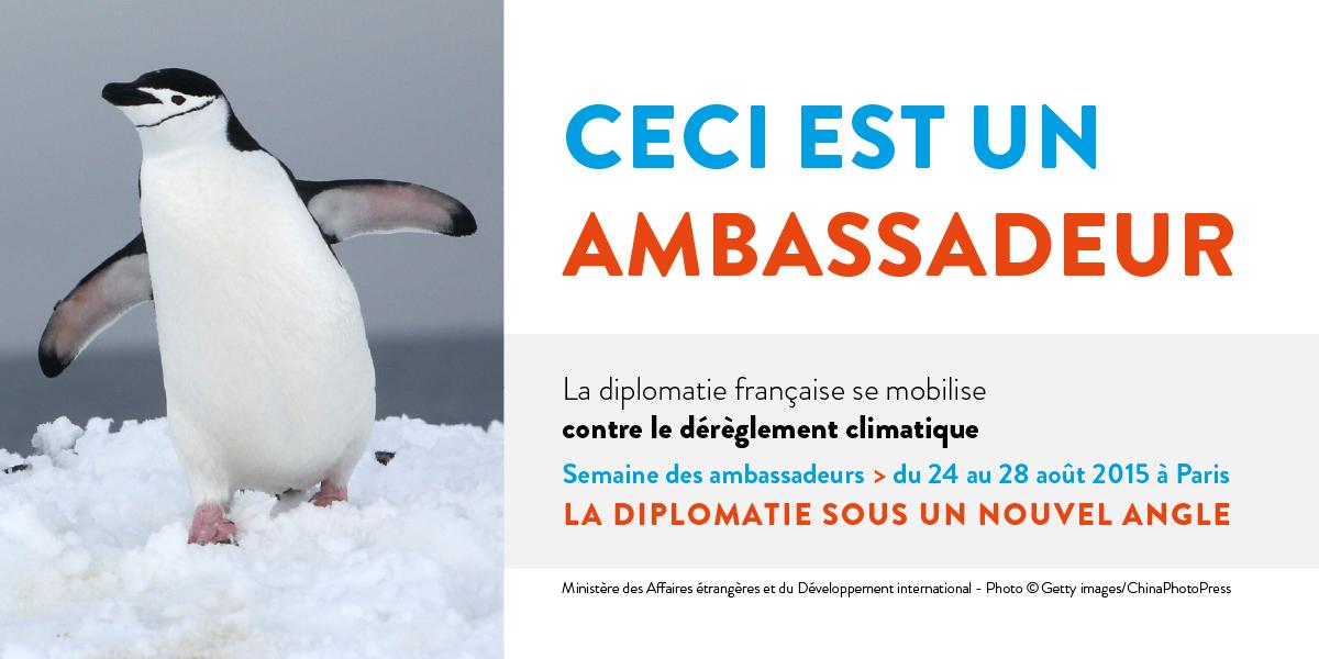 pingouin-formatpaysage