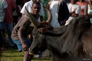 Fête du zébu, animal ayant une valeur spirituelle à Madagascar - Crédit : Eric Soler / Flickr