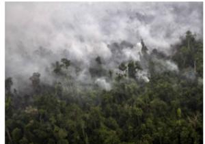 Au moins 500 000 cas de maladies respiratoires attribuées aux feux de forêt de cette année 2015 – Crédit photo : The News USA / Flickr CC