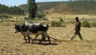 travail-du-sol-en-ethiopie-hydrorétenteur-reverdir